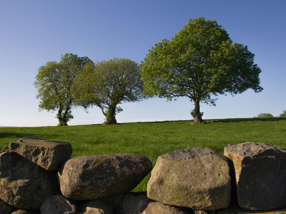 Three Trees in Antrim